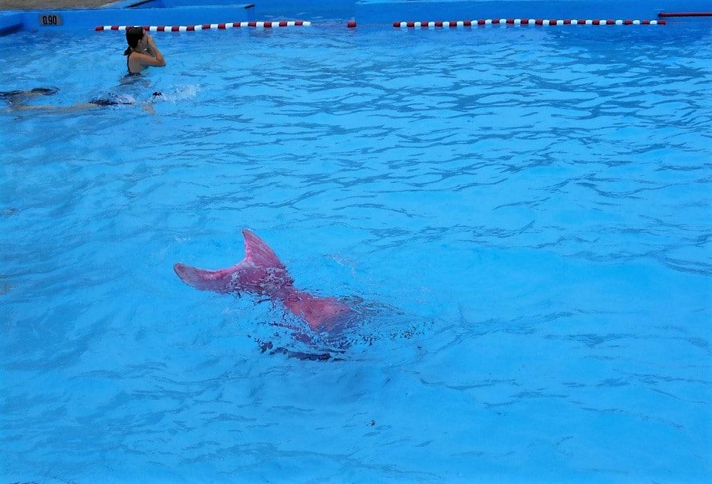 24-Std.-Sp.schwimmen 11, 22.7.2018